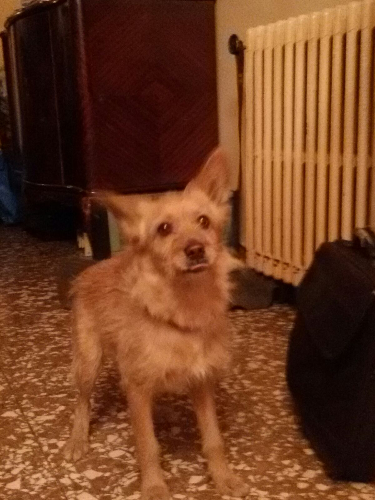 Lost & Found Dog in Lebanon: Mixt dog lost
