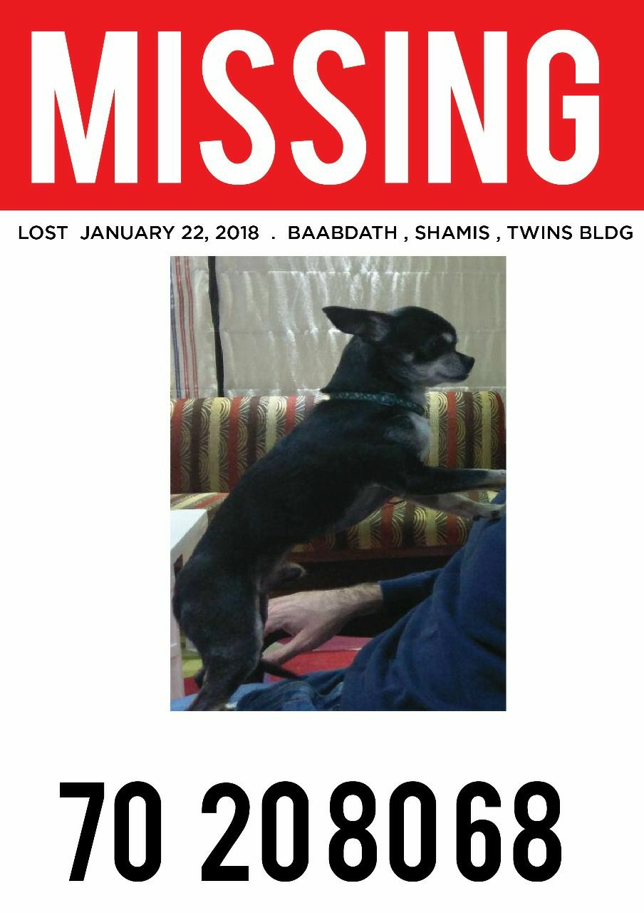 Lost & Found Dog in Lebanon: Black Male Chiwawa