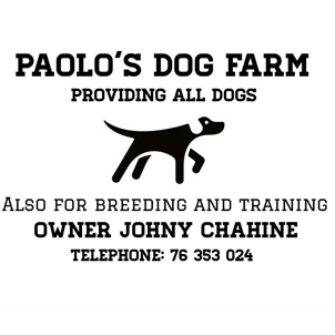 Pet Trainer in Lebanon: Paolo